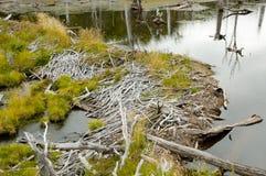 Beaver Dam - Tierra Del Fuego - Argentina Stock Photo