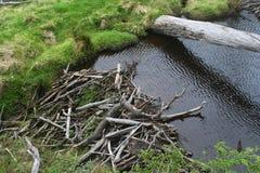 The beaver dam Royalty Free Stock Photos