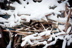 Beaver dam in winter Royalty Free Stock Photography