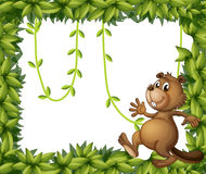 A beaver and the empty frame with vine plants Royalty Free Stock Image