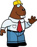 Beaver Foreman Stock Image