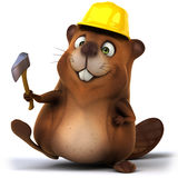 Beaver Royalty Free Stock Image