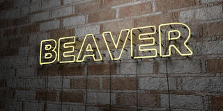 BEAVER - Glowing Neon Sign on stonework wall - 3D rendered royalty free stock illustration Stock Photography