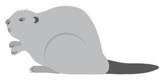 Beaver Grayscale Vector Illustration Stock Photography
