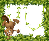 A beaver and the green leafy border Stock Photos