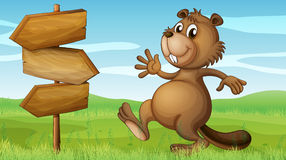 A beaver in the hills near the wooden signboard Stock Photography
