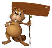 A beaver holding a sign board. Illustration of a beaver holding a sign board on a white background Royalty Free Stock Photography