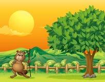 A beaver holding a stick across the mountain Royalty Free Stock Photos