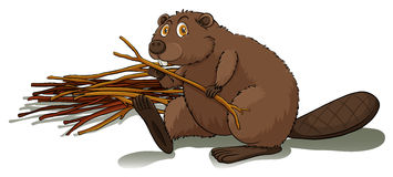 Beaver holding a stick. Brown beaver holding a stick on a white background Royalty Free Stock Photo