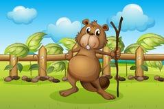 A beaver holding a stick Stock Photo