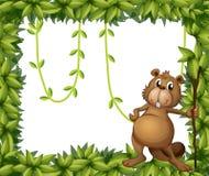 A beaver holding a stick on a leafy frame Stock Image