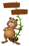A beaver holding a vine plant with signboards Stock Image