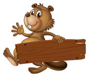 A beaver holding a wooden signboard Royalty Free Stock Image