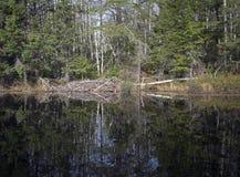 Beaver house Stock Photo