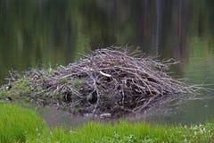 Beaver House Royalty Free Stock Image