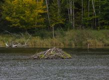 A Beaver Hut in Acadia National Park stock photography