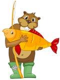 Beaver i CREES Immagine Stock Libera da Diritti