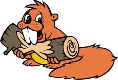 Beaver isolated on the white background Stock Image