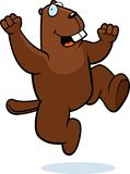 Beaver Jumping Stock Image
