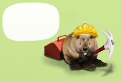 Beaver Labor. Can input wording in textbox Royalty Free Stock Image