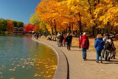 Beaver lake and foliage in autumn colors. royalty free stock image