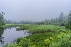 Beaver Lake. In forest in mountain Bieszczady , Poland Stock Photo