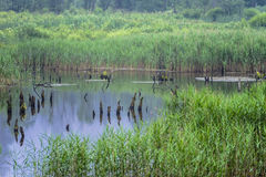 Beaver Lake Stock Photography