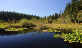 Free Beaver Lake In Stanley Park, Vancouver Royalty Free Stock Photo - 78541115