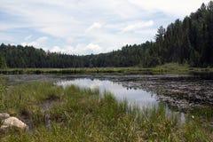 Beaver Lakes, Algonquin Provincial Park Stock Photos