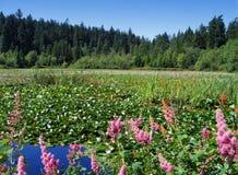 Beaver le lac, stationnement de Stanley, Vancouver Image libre de droits