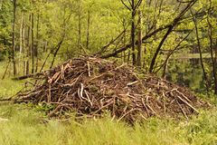 BEAVER LODGE Royalty Free Stock Image