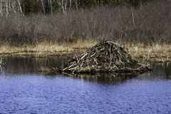 Beaver Lodge royalty free stock photos
