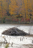 Beaver lodge Stock Images