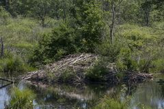 A beaver lodge Royalty Free Stock Photography
