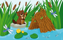 Beaver Lodge. Illustration of a beaver hut on the pond with a beaver Royalty Free Stock Photos