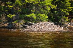 Beaver lodge. In a lake in Saguenay, Quebec, Canada Royalty Free Stock Photography