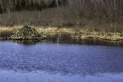Beaver Lodge Pond. Blue waters, blue sky, and a home on the water.  Beavers have it made Stock Photo