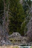 Beaver Lodge in Grand Teton National Park royalty free stock photos