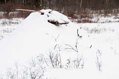 Beaver lodge in snow Royalty Free Stock Images