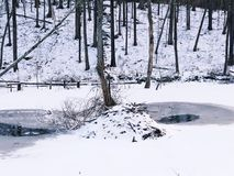 Beaver lodge in snow. A beaver lodge after snow in winter in falls village connecticut United States stock photos