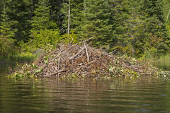 Beaver Lodge on a Wilderness River Royalty Free Stock Image