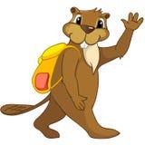Beaver a los CREES Imagen de archivo libre de regalías