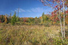 Beaver Meadow in Autumn. Haliburton, Ontario, Canada royalty free stock photos