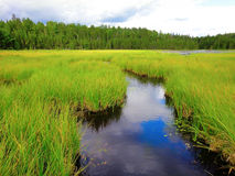Beaver meadow Royalty Free Stock Photography
