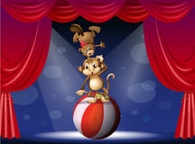 A beaver and a monkey perfoming on the stage Royalty Free Stock Photos