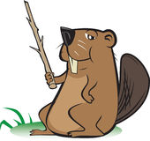 Beaver with Pointer Stick Stock Photos