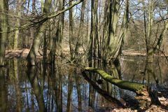 Beaver pond Royalty Free Stock Image