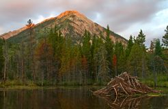 Beaver Pond. Sunrise at a Colorado Beaver Pond Royalty Free Stock Image