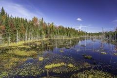 Beaver Pond in Autumn - Ontario, Canada Royalty Free Stock Photos