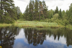 Beaver Pond Stock Photos